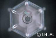 「南無阿弥陀仏」の文字を見せた結晶