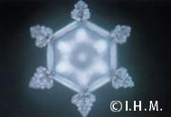 写真 7 「永遠」の文字を見せた結晶