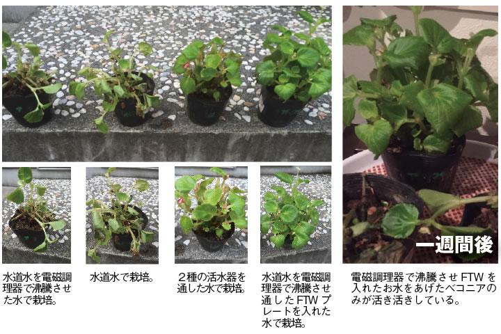FTWビューラプレート花の実験