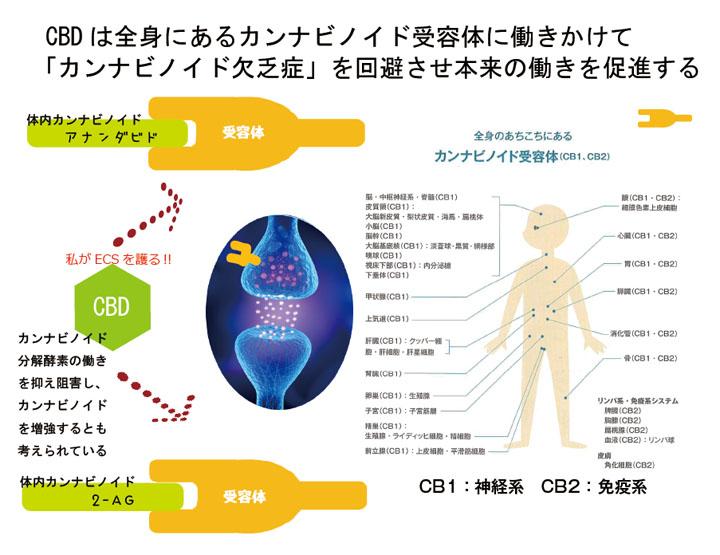 カンナビノイド受容体